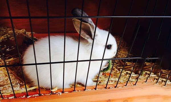 Best Indoor Rabbit Hutches Pens and Cages