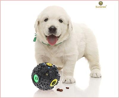 SunGrow interactive dog toy