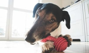 11 Best Chew Toys for Aggressive Chewers