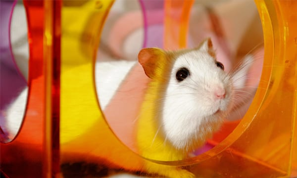Best Hamster Balls
