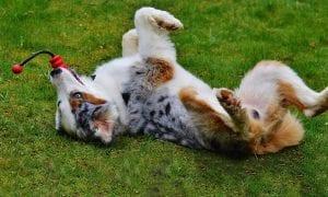 11 Indestructible Dog Toys