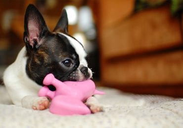 13 Squeaky Dog Toys