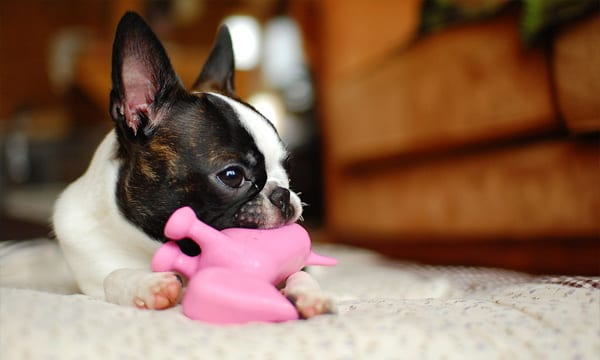 14 Best Dog Squeaky Toys