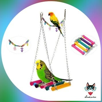parakeet on colored swing and swing accessories on the side