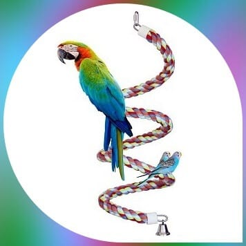 parakeet on kintor rope swing toy