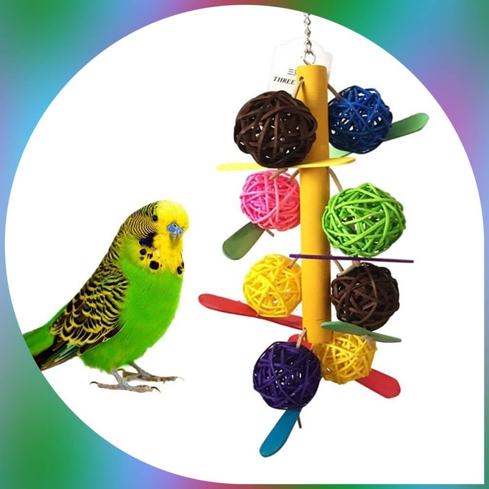 parakeet near rattan balls toy from maiyuan