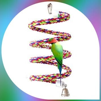 parakeet on spiral multicolored bungee cord toy