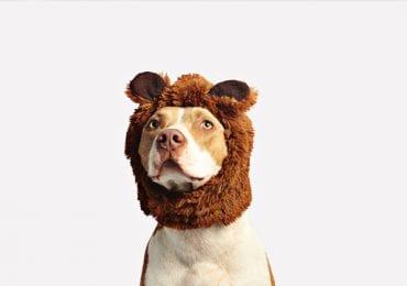 10 Best Pitbull Chew Toys