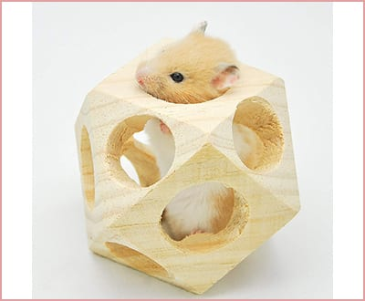 Best niteangel wooden interactive Chew Toys for Hamsters