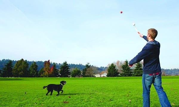 10 Best Dog Ball Launchers