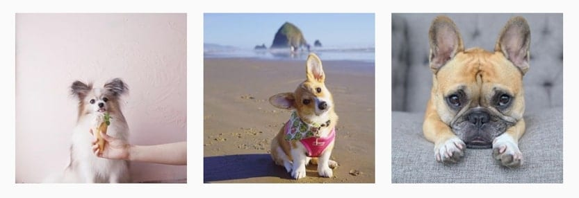collection of dog images