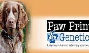 Maximilian Lorbiecki on How to Improve Canine Health