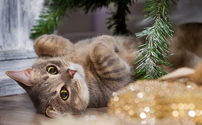 small kitten and christmas tree