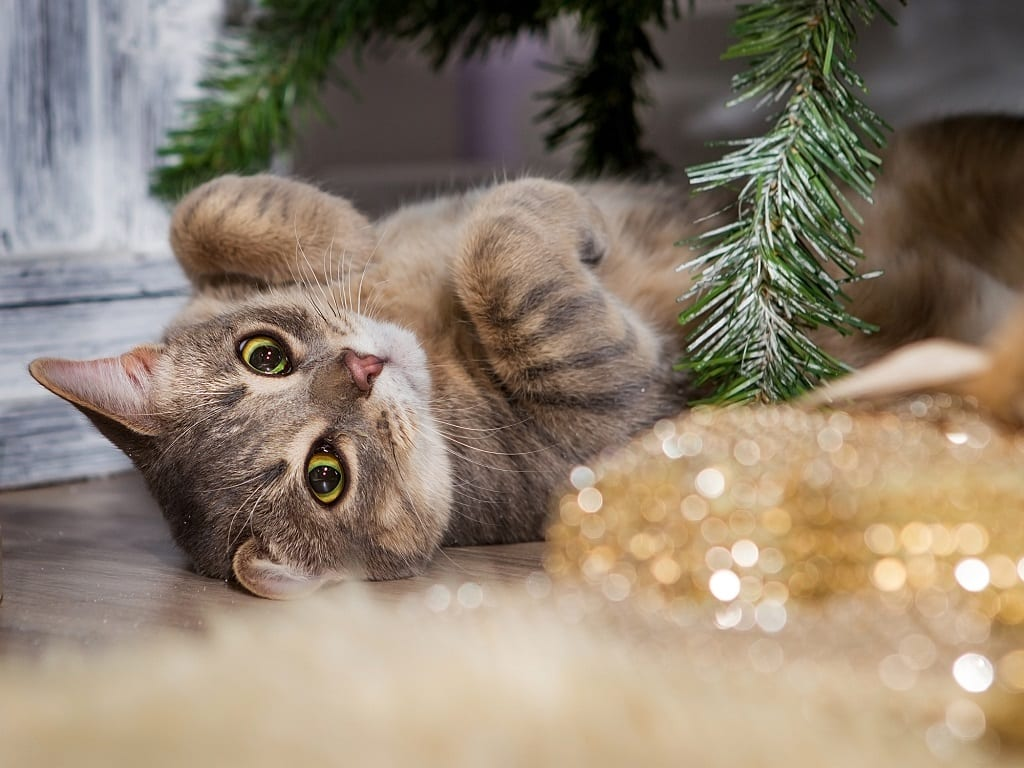 How Do Cats Survive Winter? 27 Cat-tastic Tips You'll Love