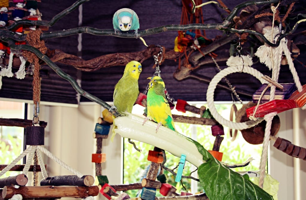 10 Best Parrot Toys for Your Feathered Friend!
