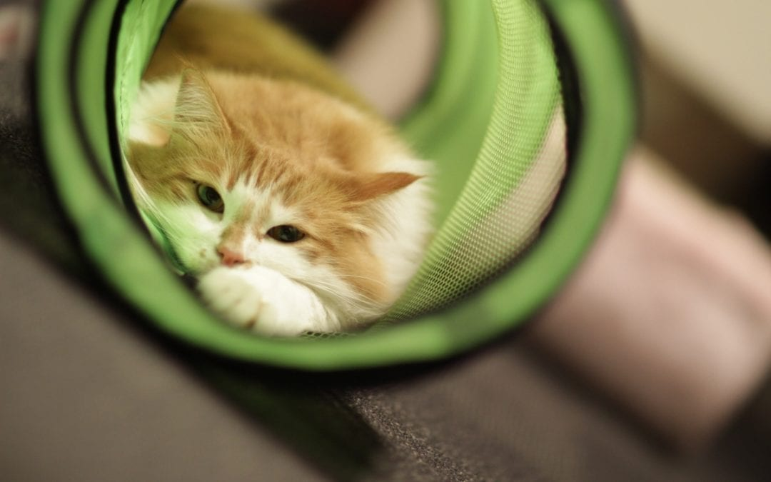 9 Best Cat Tunnels to Keep Them Easily Entertained