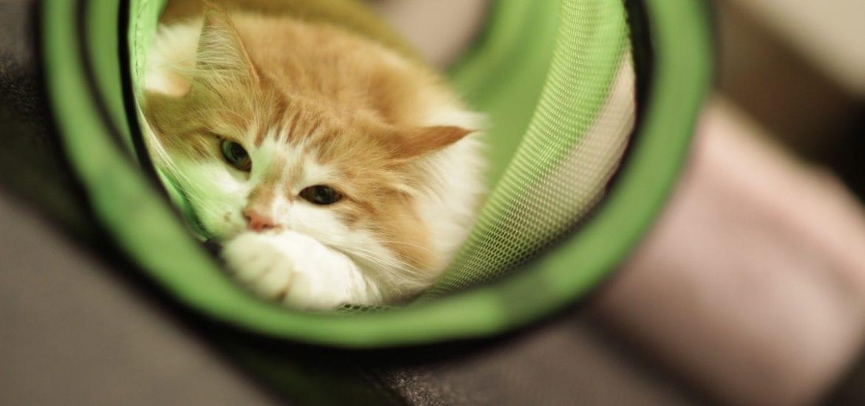 cat in cat tunnel