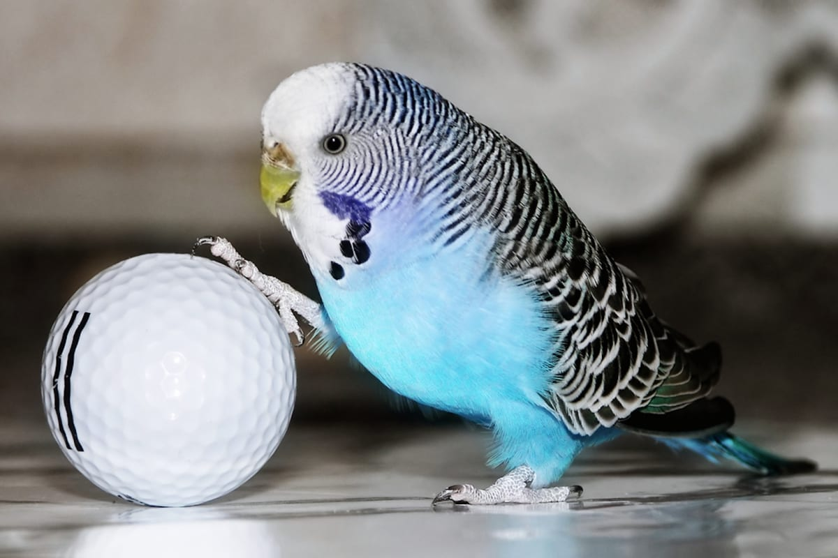 10 Best Parakeet Toys to Keep Them Entertained