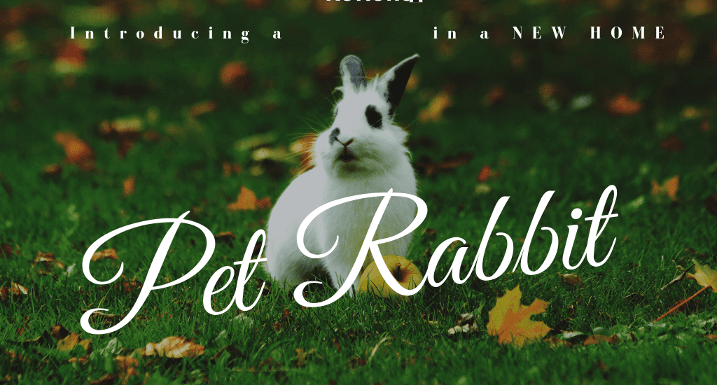 pet rabbit in the grass