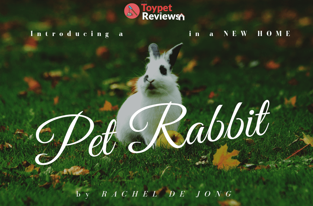 How to Introduce a Pet Rabbit Into its New Home in 6 Steps