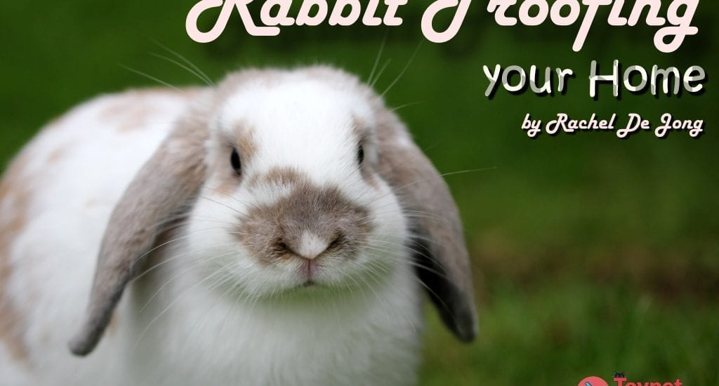 rabbit with long ears and text