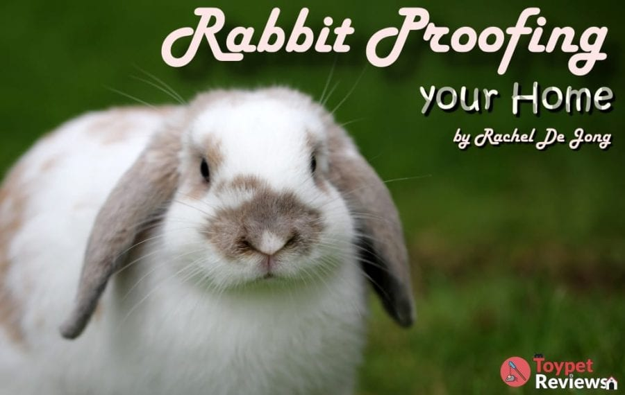 Rabbit Proofing Your Home for Your New Friend