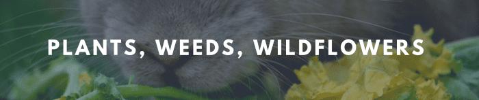 rabbit munching on wildflower banner