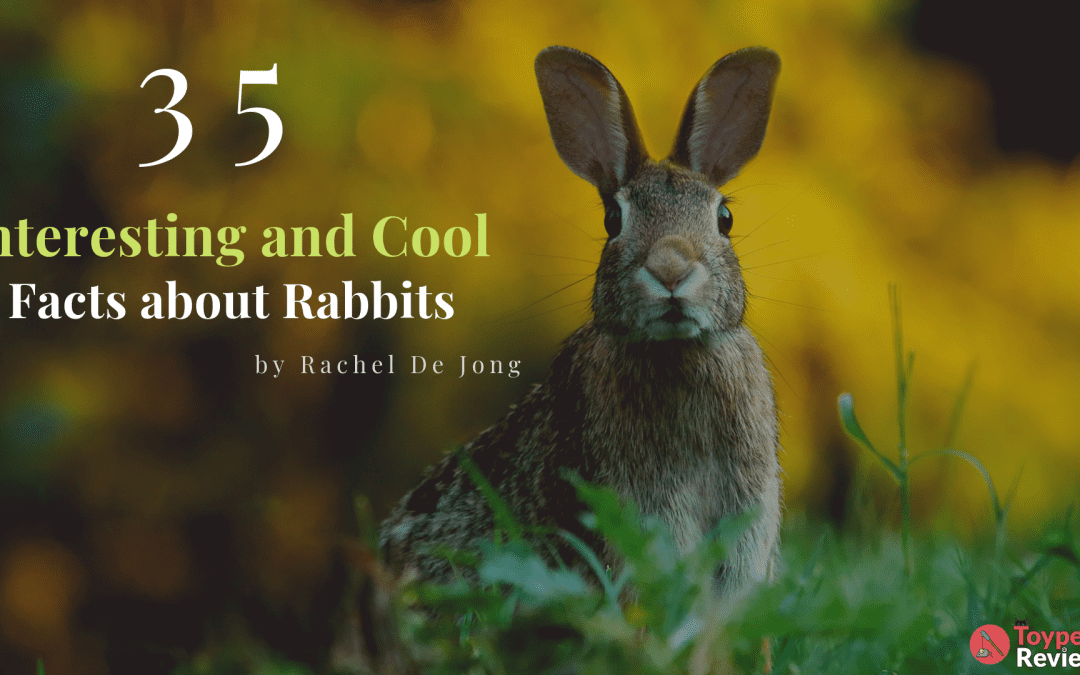 35 Interesting and Cool Facts About Rabbits