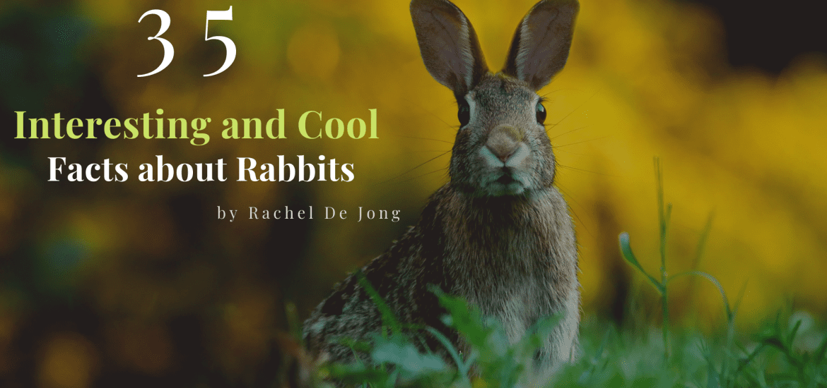 interesting facts about rabbits featured with rabbit in the center