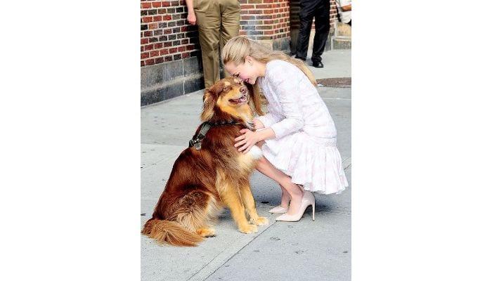 amanda seyfried with dog