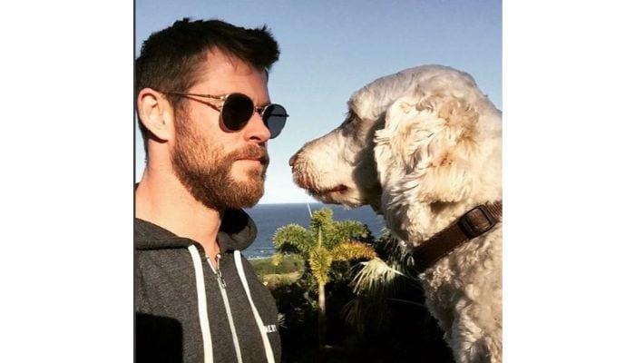 chris hemsworth with dog
