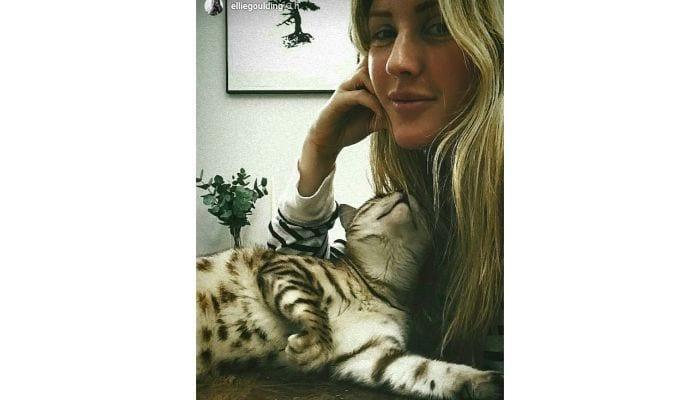 ellie goulding selfie with cat