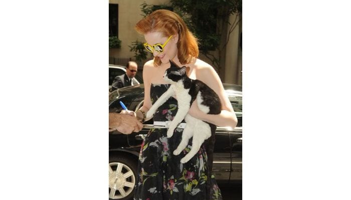 evan rachel wood holding cat and signing autograph