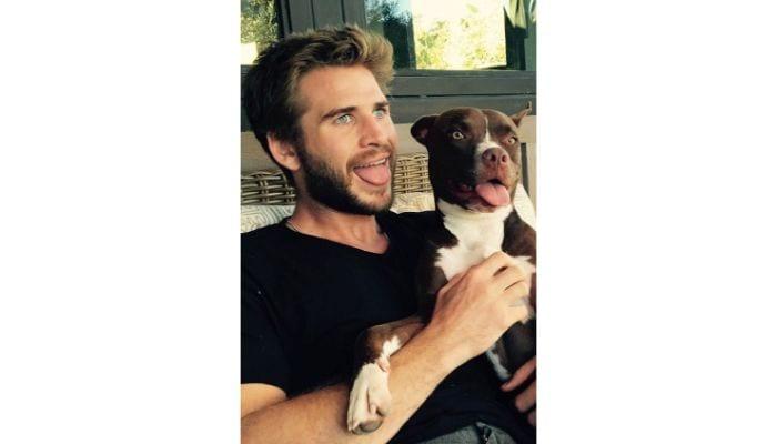 liam hemsworth and dog