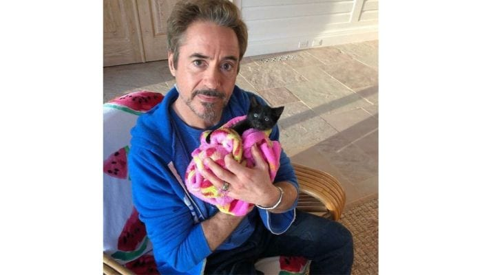 robert downey jr with cat