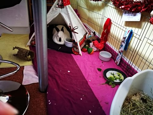 speedy the rabbit in a pet teepee