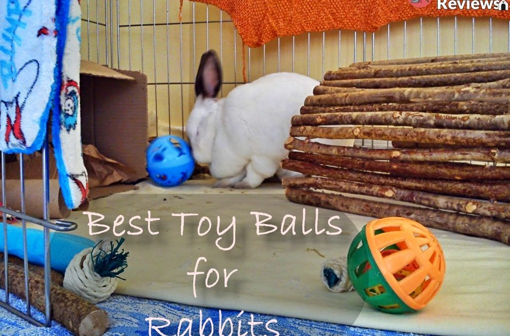 5 Best Toy Balls for Rabbits to Play With!