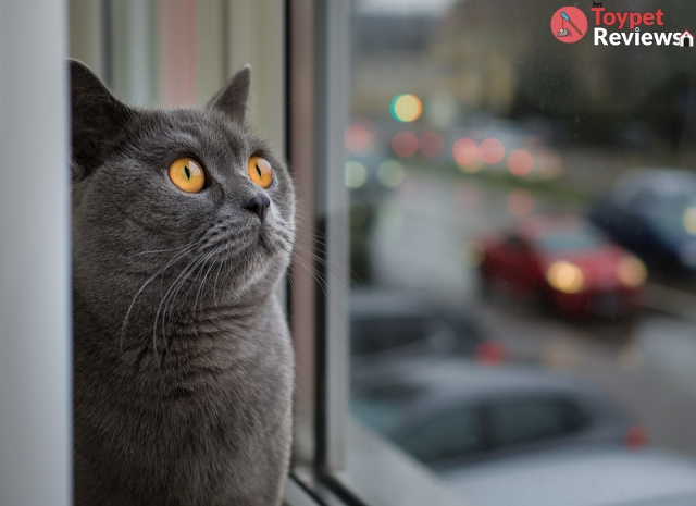 10 Best Cat Window Perches for Enjoying the View