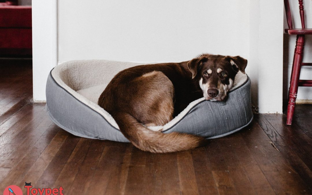 10 Best Dog Beds for Your Doggo