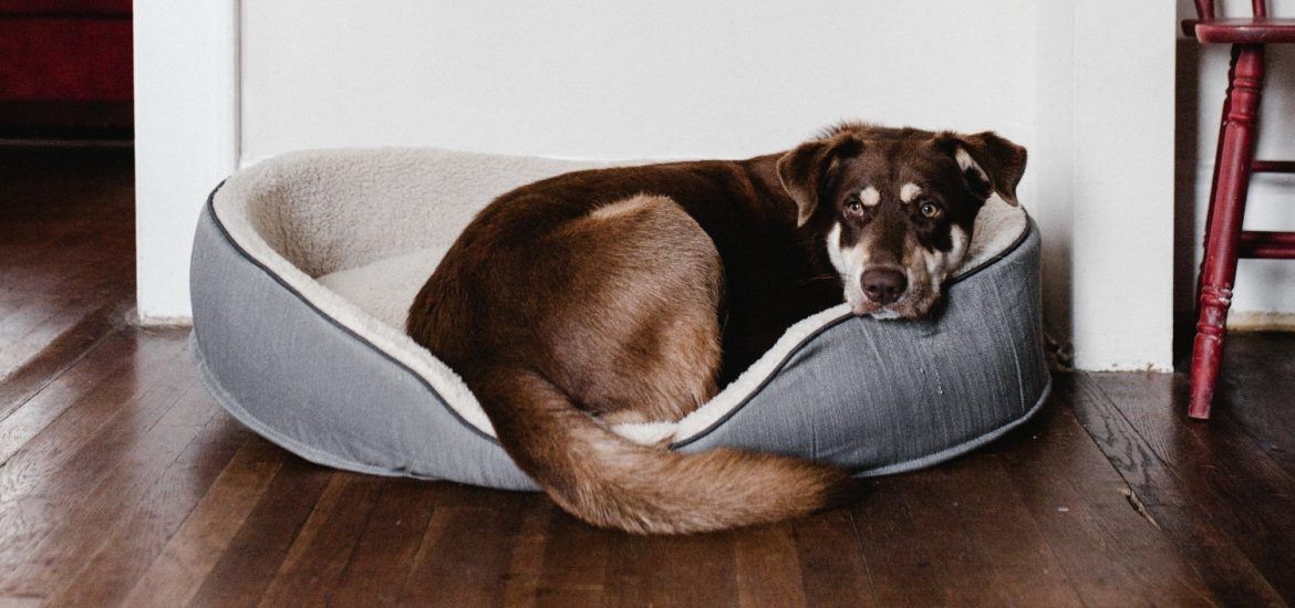 dog sleeping in the best dog beds