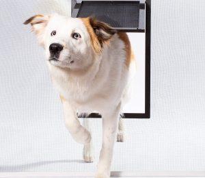 PetSafe Pet Screen Door Dog and Cat Door for Screen Door