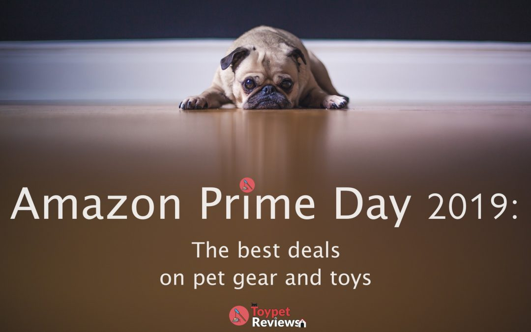 Amazon Prime Day 2019: Great Deals for Your Pets