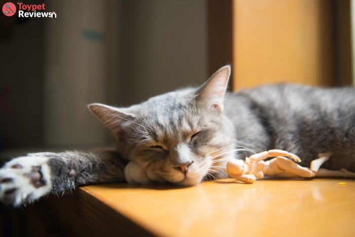 cat with humanoid toy sleeping