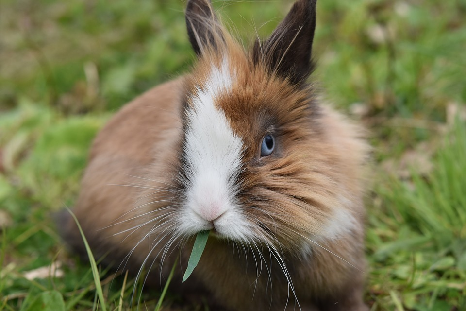 5 Best Travel Cages and Pens for Your Rabbits