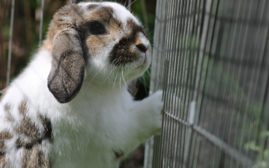 6 Best Rabbit Enclosures for Your Pet
