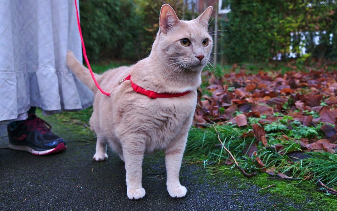7 Best Cat Harness Picks for Safe Walks
