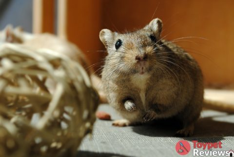 10 Best Chew Toys for Hamsters to Keep Them Active