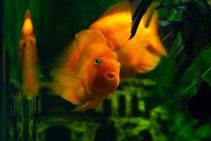 Best Aquarium Filter Large Tanks