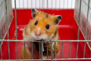 10 Best Hamster Cages of 2019