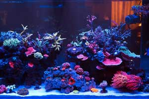 Best Saltwater Fish Tanks